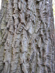 Rough bark of tree